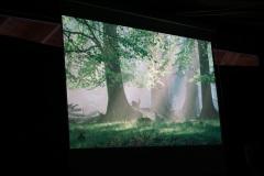 "Festival der Natur, Filmabend:  ""Das grüne Wunder - unser Wald"" - 22. Mai 2016"