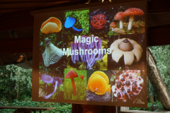 Magic Mushrooms - 19. Juni 2019 - Referat von Prof. Dr.Aebi