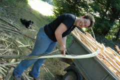 Weiden schälen im Wald - Juli 2008