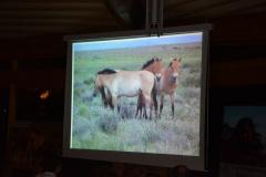 Wildpferde in der Mongolei - 15. Januar 2014 - Vortrag von Thomas Pfisterer